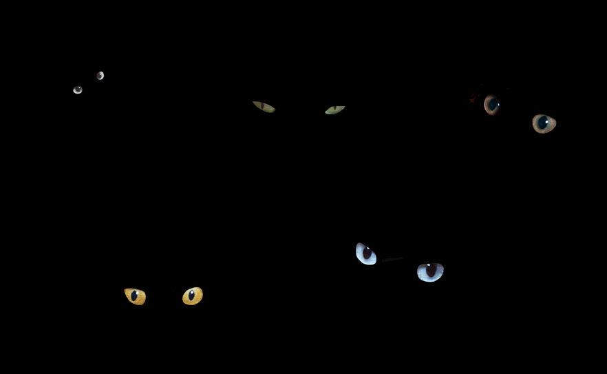 暗闇で猫の目が光る理由の雑学
