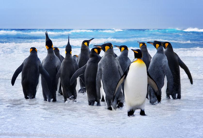 ペンギンの足に関する雑学