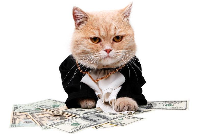 1000万円以上の超高級猫の雑学
