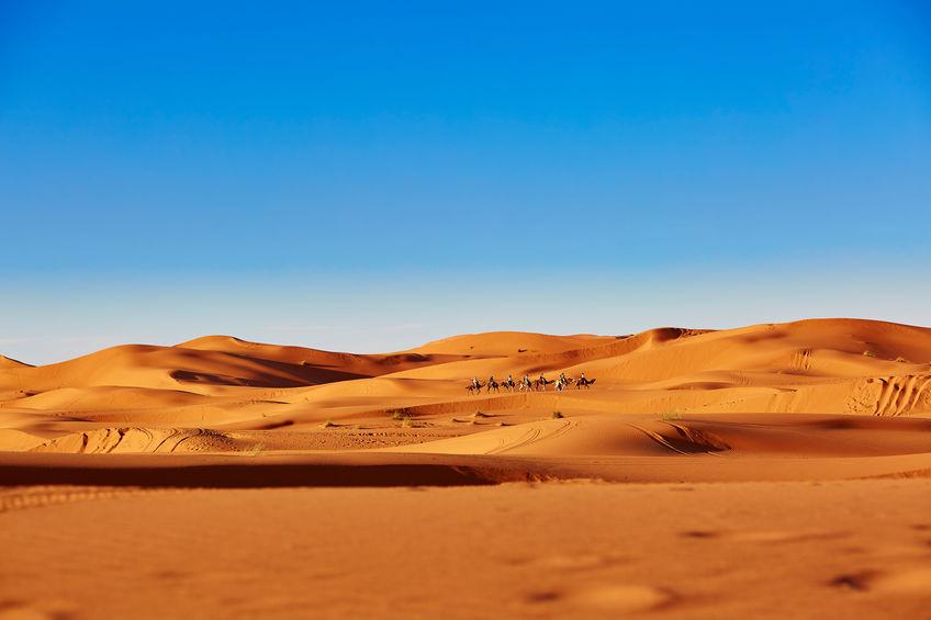 砂漠の溺死に関する雑学