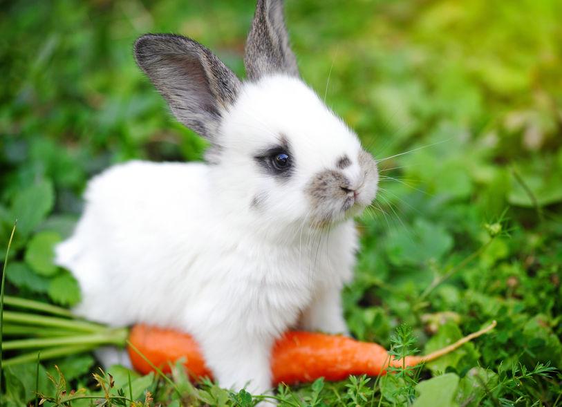 ウサギの味覚に関する雑学