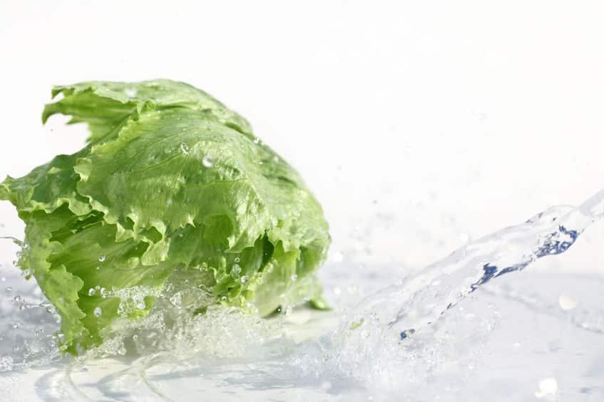 レタスの食物繊維がしょぼいことに関する雑学