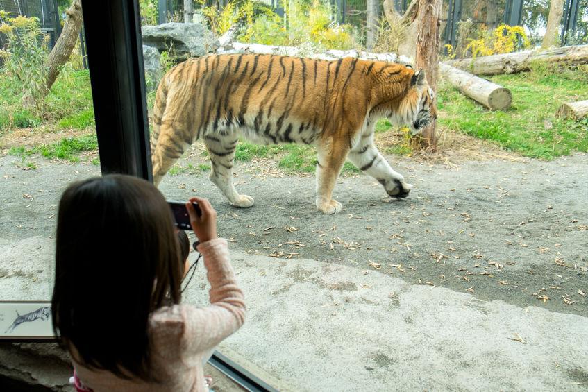 動物園が作られた理由に関する雑学
