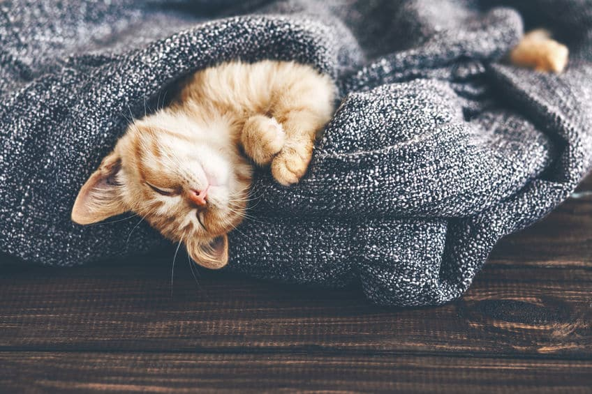 猫はどのくらい寝る?に関する雑学