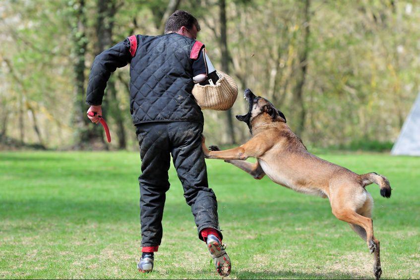 警察犬に関する雑学
