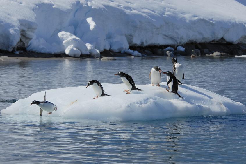 南極と風邪に関する雑学