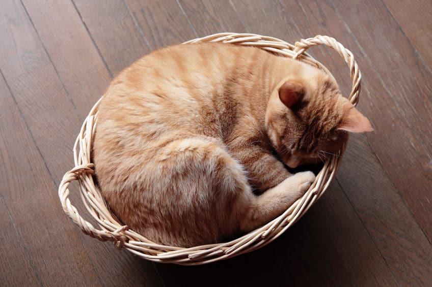 「ネコの睡眠時間」の雑学まとめ
