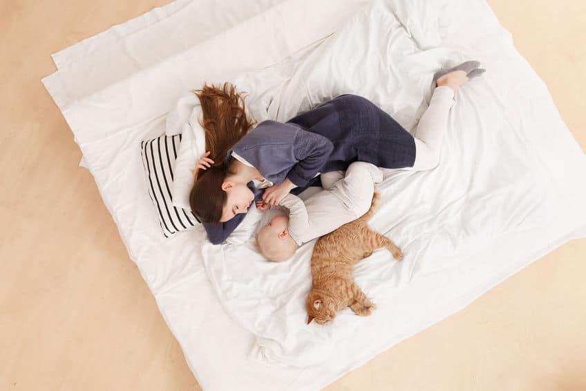 ネコが添い寝してくる理由についてのトリビア