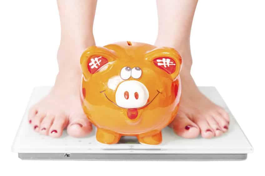 豚の体脂肪率は低いということに関する雑学