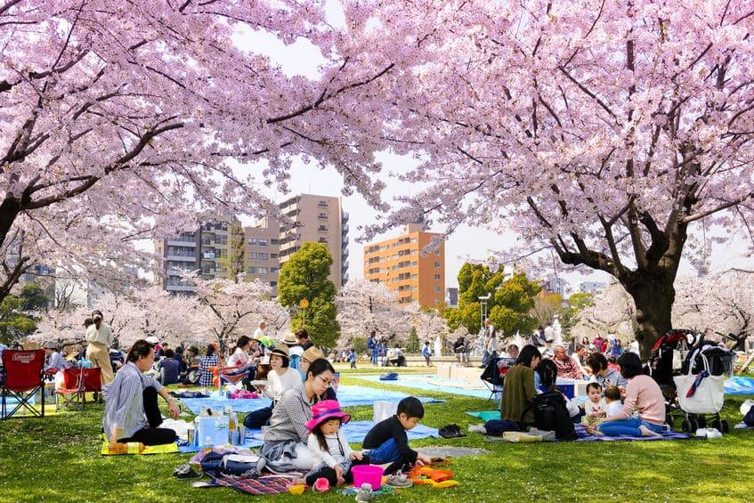盛大なお花見をするのは日本だけの文化という雑学