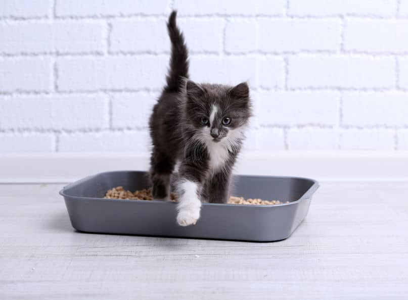 飼い猫の中には砂かけをしないネコもいるというトリビア