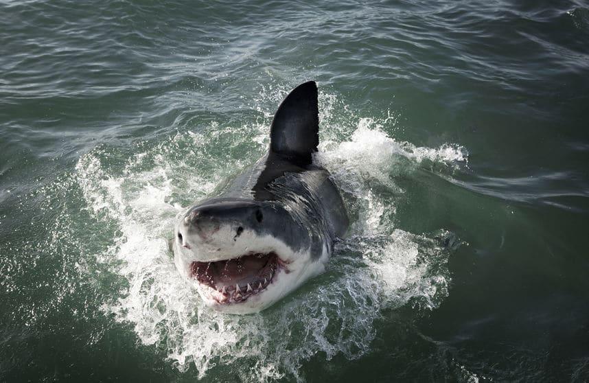 サメは海のハイエナについてのトリビア