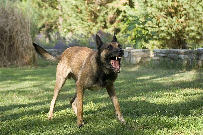 自分の犬が警察犬デビューするには?というトリビア