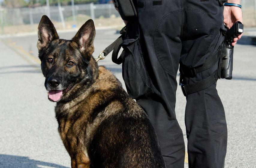 「全日本嘱託警察犬競技大会」という嘱託警察犬の大会があるというトリビア