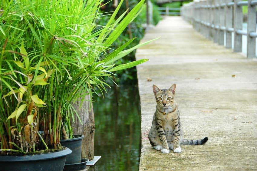 """猫が""""死ぬ前に飼い主の前から姿を消す""""に関する雑学"""