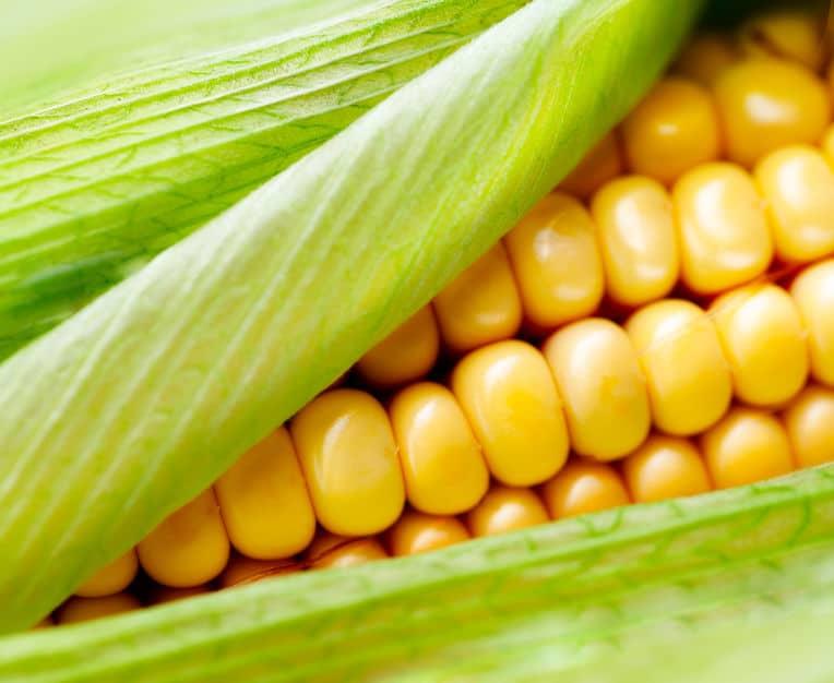 トウモロコシは皮ごとレンジでチンがおいしい!というトリビア