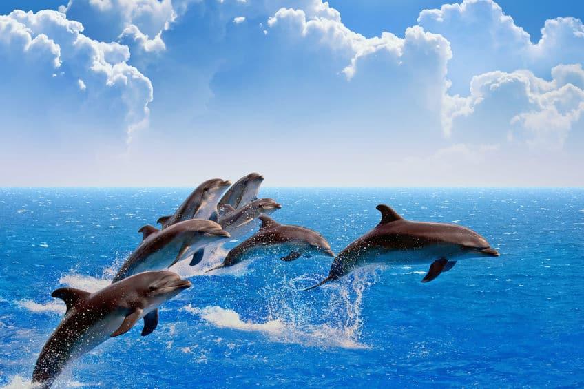 イルカは実は相当強いというトリビア
