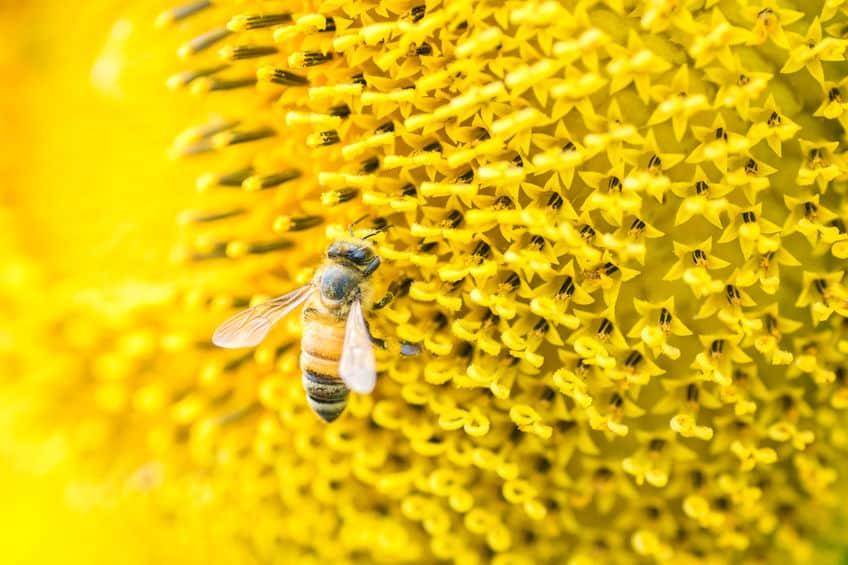 ミツバチが蜜を運ぶ方法に関する雑学