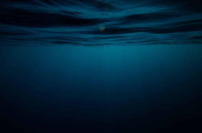 深海魚が水圧に耐えられる理由に関する雑学