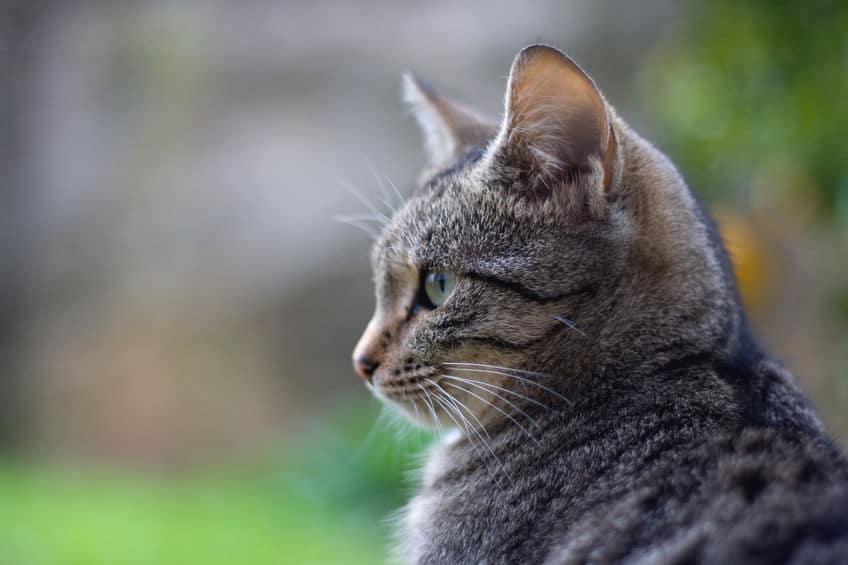 死ぬ前に姿を消すのは本当なのか?筆者が実際に体験した猫の話についてのトリビア