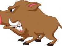 猪突猛進で有名なイノシシは曲がるのが得意という雑学
