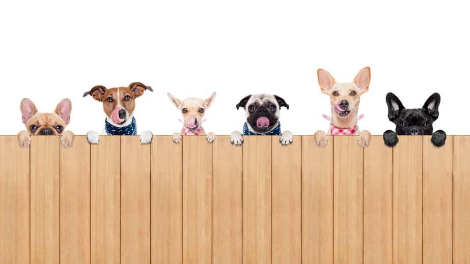 犬の名前の「ポチ」の由来は?に関する雑学