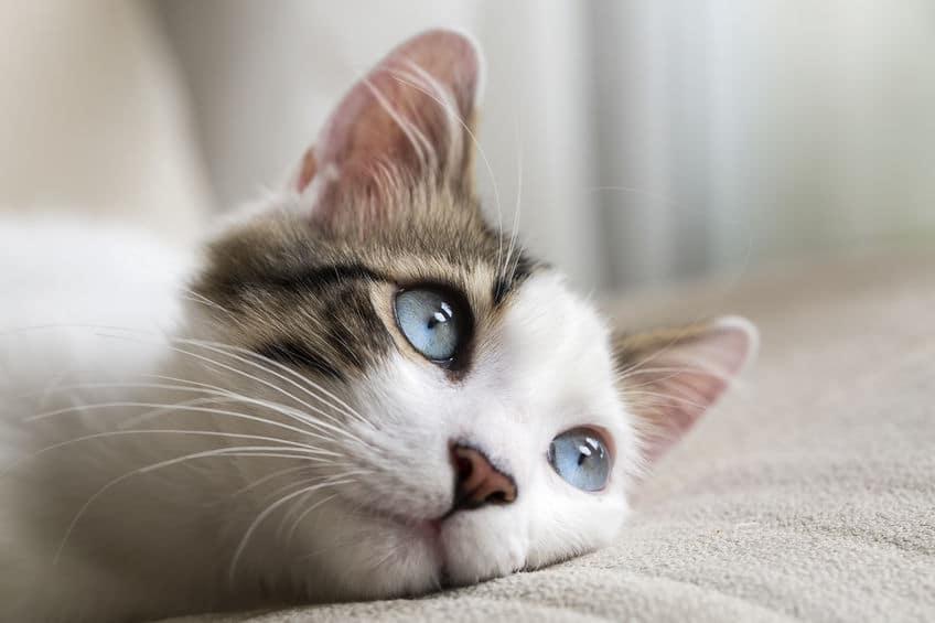 便利な機能!暗闇で猫の目が光る理由についてのトリビアまとめ