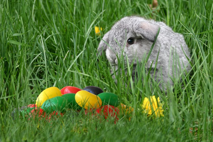 ウサギにはおやつの概念が存在するというトリビア