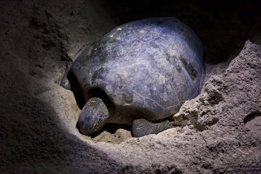 ウミガメやサンゴは「満月の夜」に産卵するという雑学