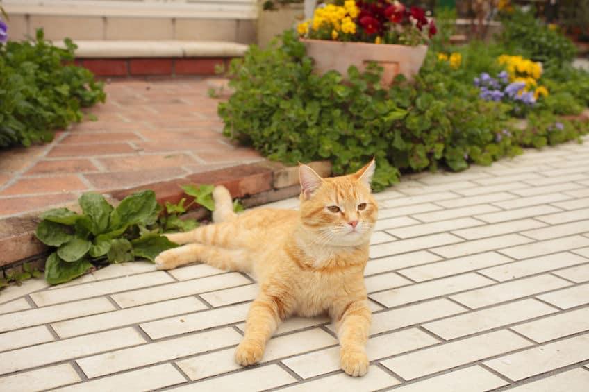 猫に振り回される人間の小話についてのトリビア