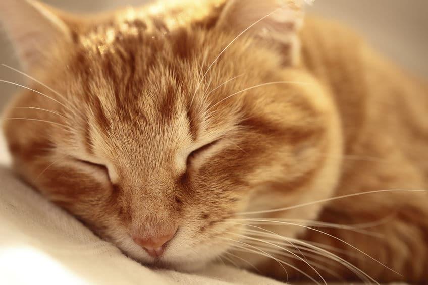 """猫が""""死ぬ前に飼い主の前から姿を消す""""はほんと?【体験談】についてのトリビアまとめ"""