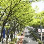 街路樹にはあえて葉の落ちる落葉樹が植えられているという雑学