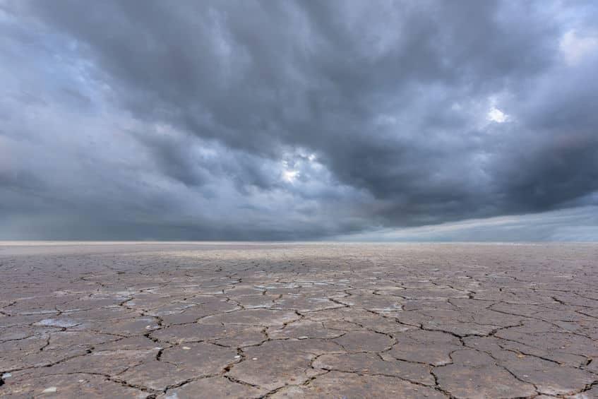 砂漠に雨が降ると洪水が起こり溺死してしまう