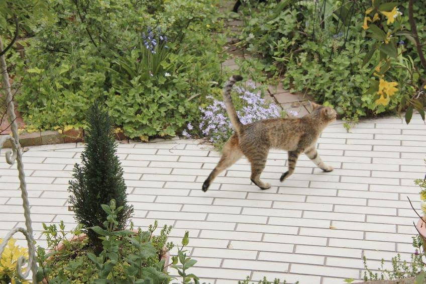 死ぬ前に突然いなくなる猫の謎はその習性にあったというトリビア