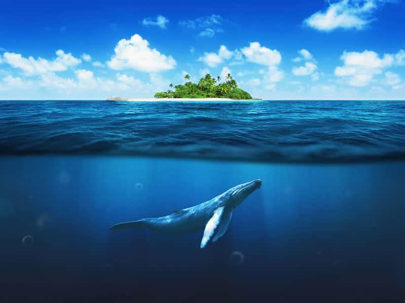クジラが陸で生きられない理由に関する雑学