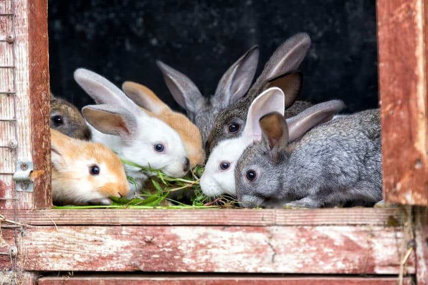 ウサギは偏食で太ったりするというトリビア