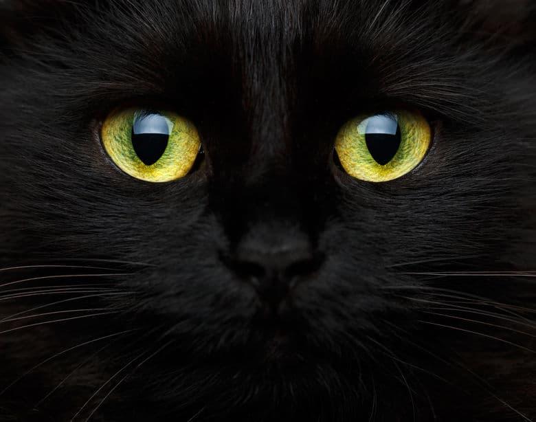 猫の目が光る理由はその構造にあるというトリビア