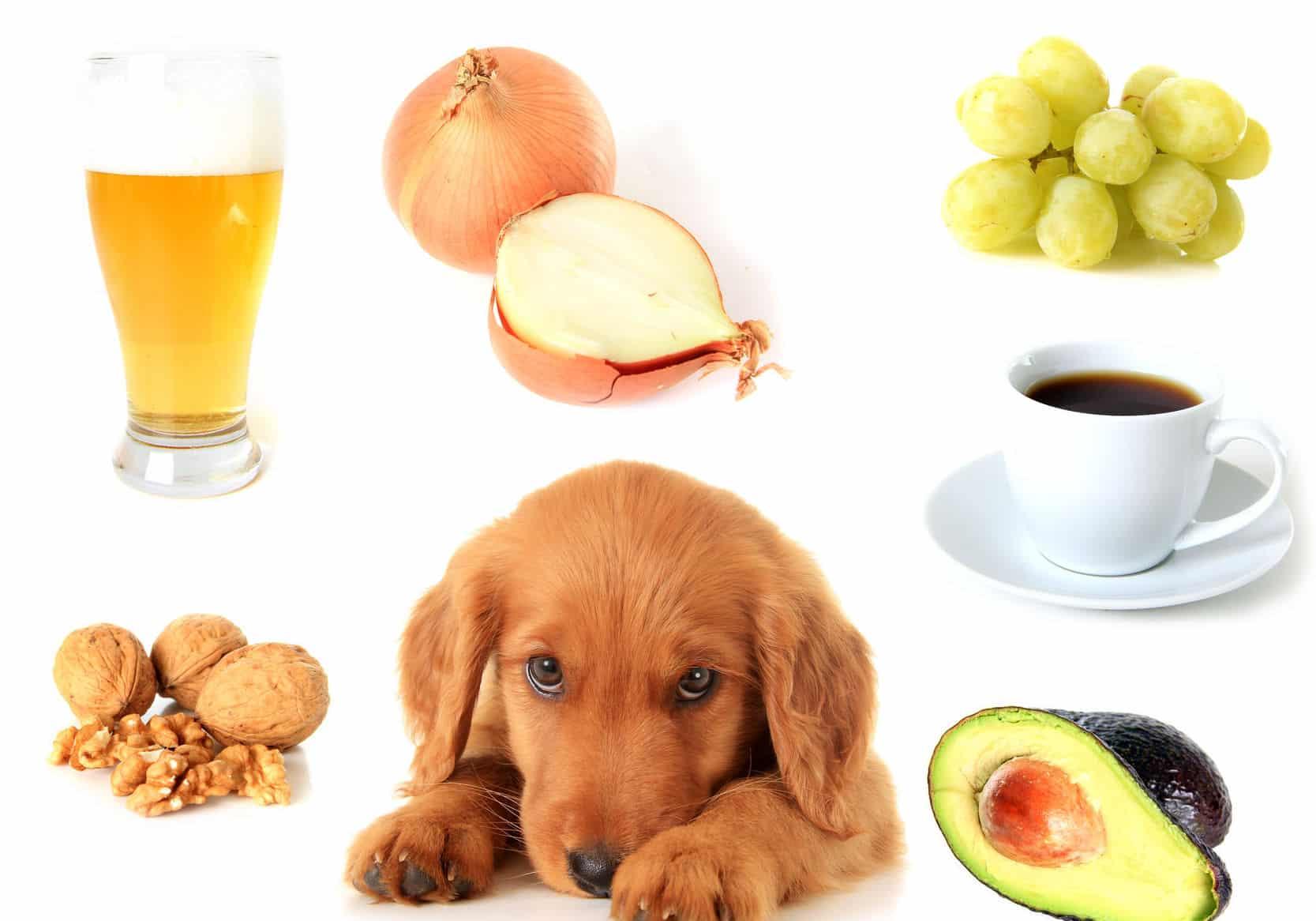 犬が玉ねぎを食べるとどうなる?という雑学