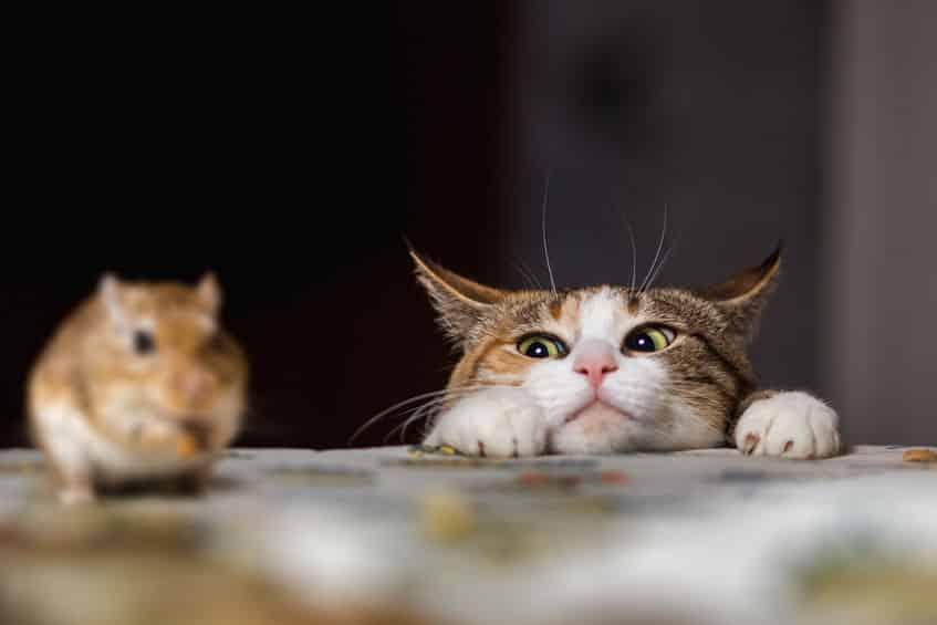 スコットランドの醸造所ではウイスキーキャットと呼ばれる猫が飼われているという雑学