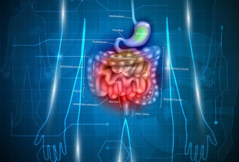 十二指腸の由来は?に関する雑学