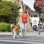 盲導犬には信号の色が見えている?に関する雑学