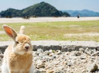 日本には「うさぎ」だけが住む島があるという雑学