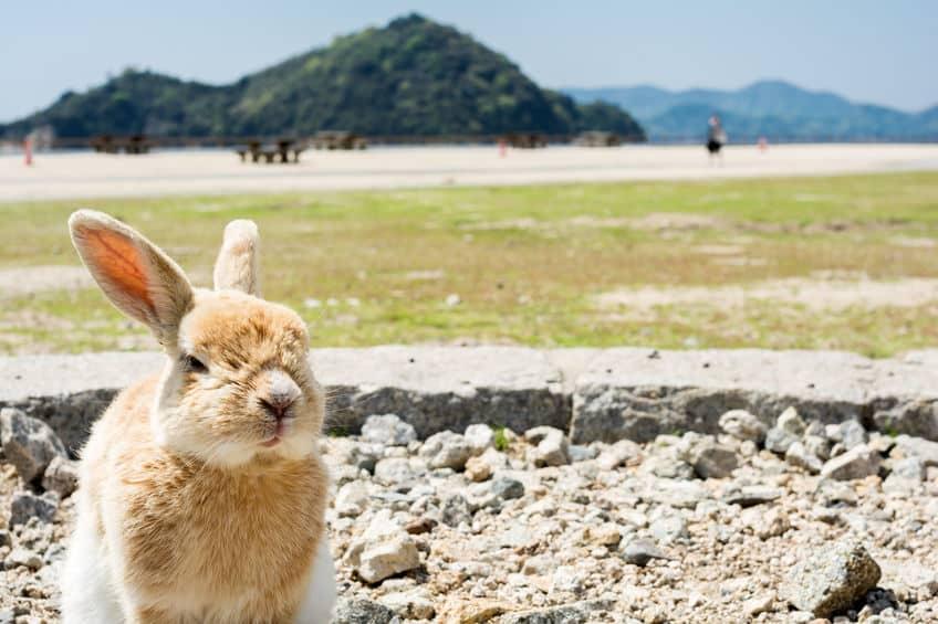 日本には「ウサギ」だけが住む島があるという雑学