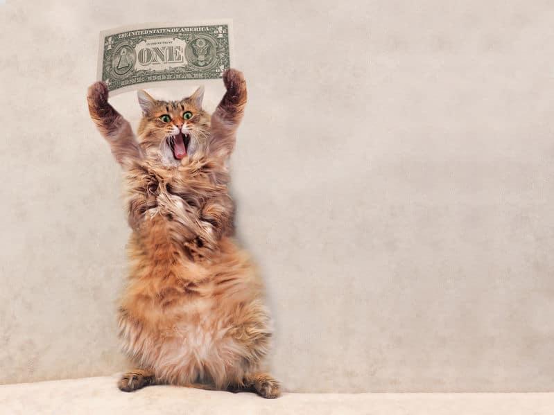高級猫ランキングの雑学