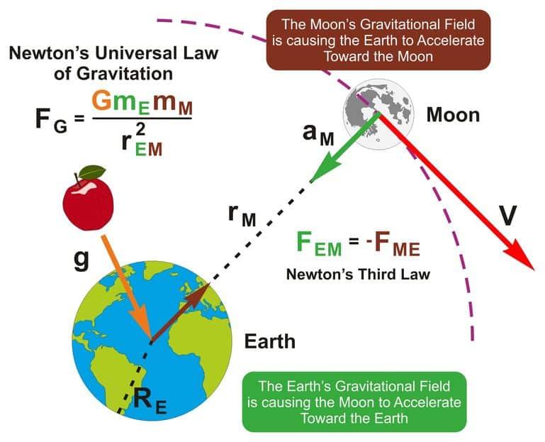 天才学者ニュートンと猫の関係