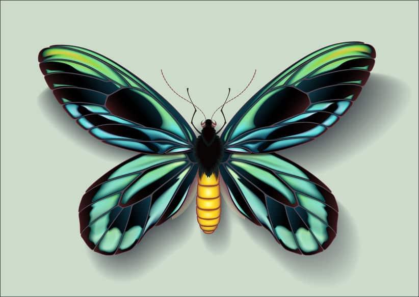 世界一大きなチョウはアレクサンドラトリバネアゲハという雑学