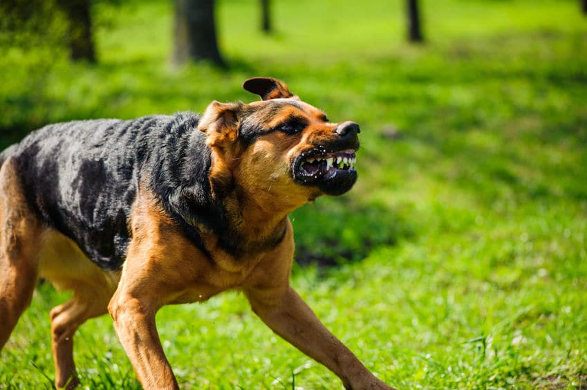 狂犬病の恐さというトリビア