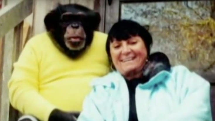 人気チンパンジーが起こした事件に関する雑学