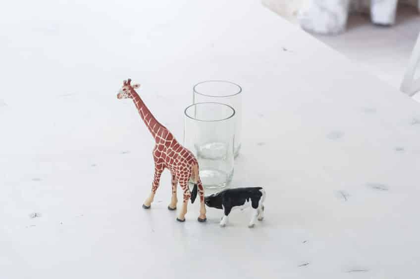 実は親戚!キリンと牛の鳴き声がめっちゃ似てるんですけど!についてのトリビアまとめ