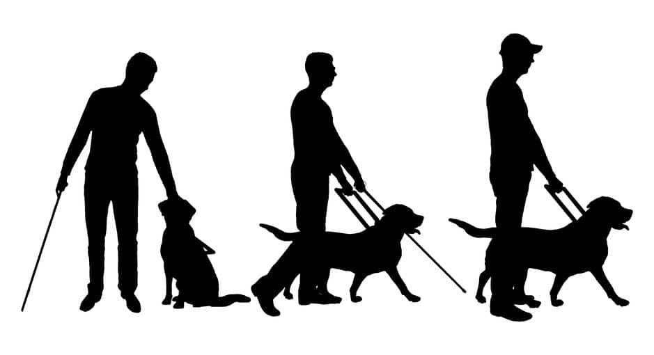 盲導犬になるための3つの訓練についてのトリビア